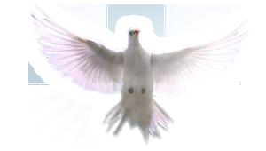 Parafia Rzymskokatolicka Świętego Ducha